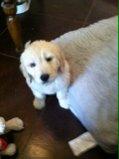 Maddie at 7 weeks